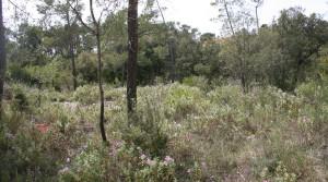 Terrain constructible à saisir Sillans-la-Cascade Réf. : 4397