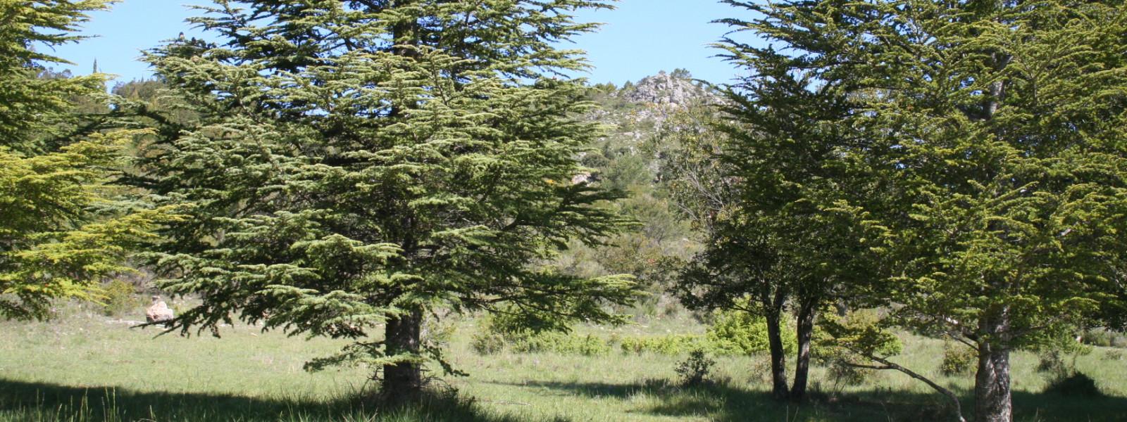 32 hectares de terrain à Tourtour